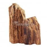 Skałka skamieniałe drewno M 20-30cm