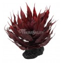 Agawa sukulent czerwony 18cm REPTI PLANET