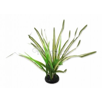 Agawa sukulent zielony 18cm REPTI PLANET
