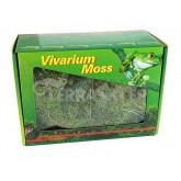 Żywy mech Vivarium Moss 150g LUCKY REPTILE