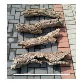 Tuba dębu korkowego 18cm/60-80cm