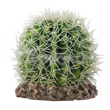 Kaktus Sonora Medium