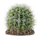 Kaktus Sonora Mały