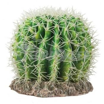 Kaktus Sonora Large