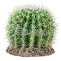 Kaktus Sonora Duży