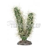 Kaktus Simpson Hobby