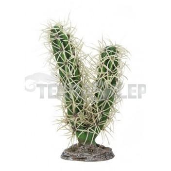 Kaktus Simpson