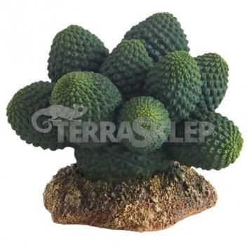 Kaktus Great Basin