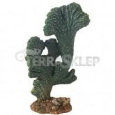 Kaktus Victoria Mały Hobby