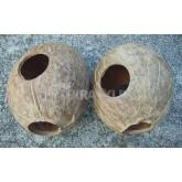 Domek kokosowy 1/1 orzecha, szczotkowany
